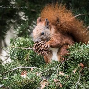 Squirrel lunch